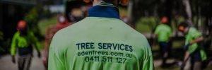 Tree Removal Service Gold Coast